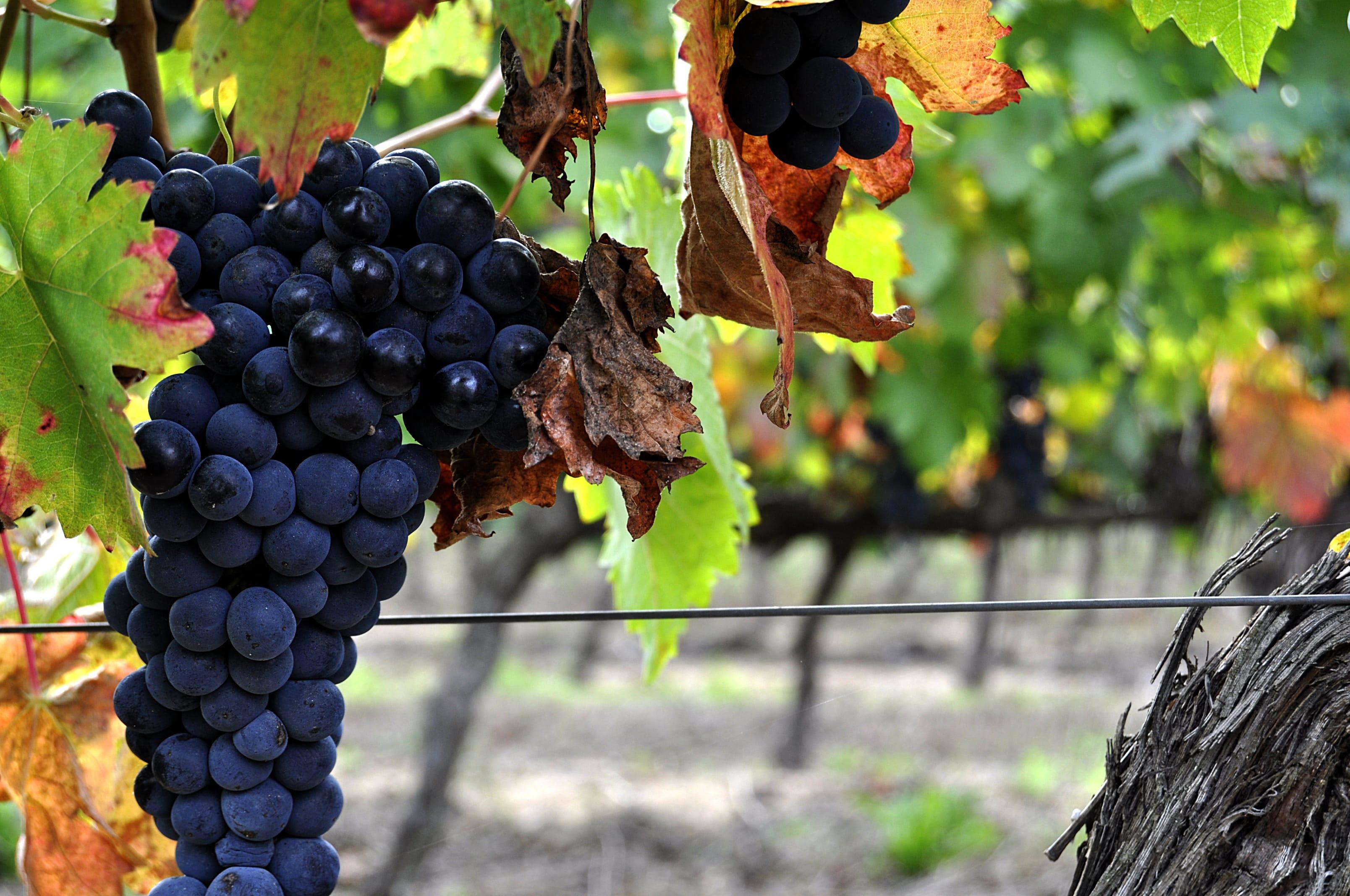 Viseu Cidade do Vinho