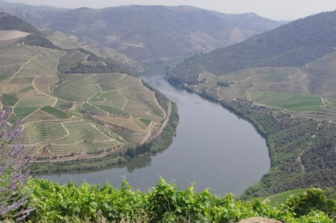 Vintage Wine Travel