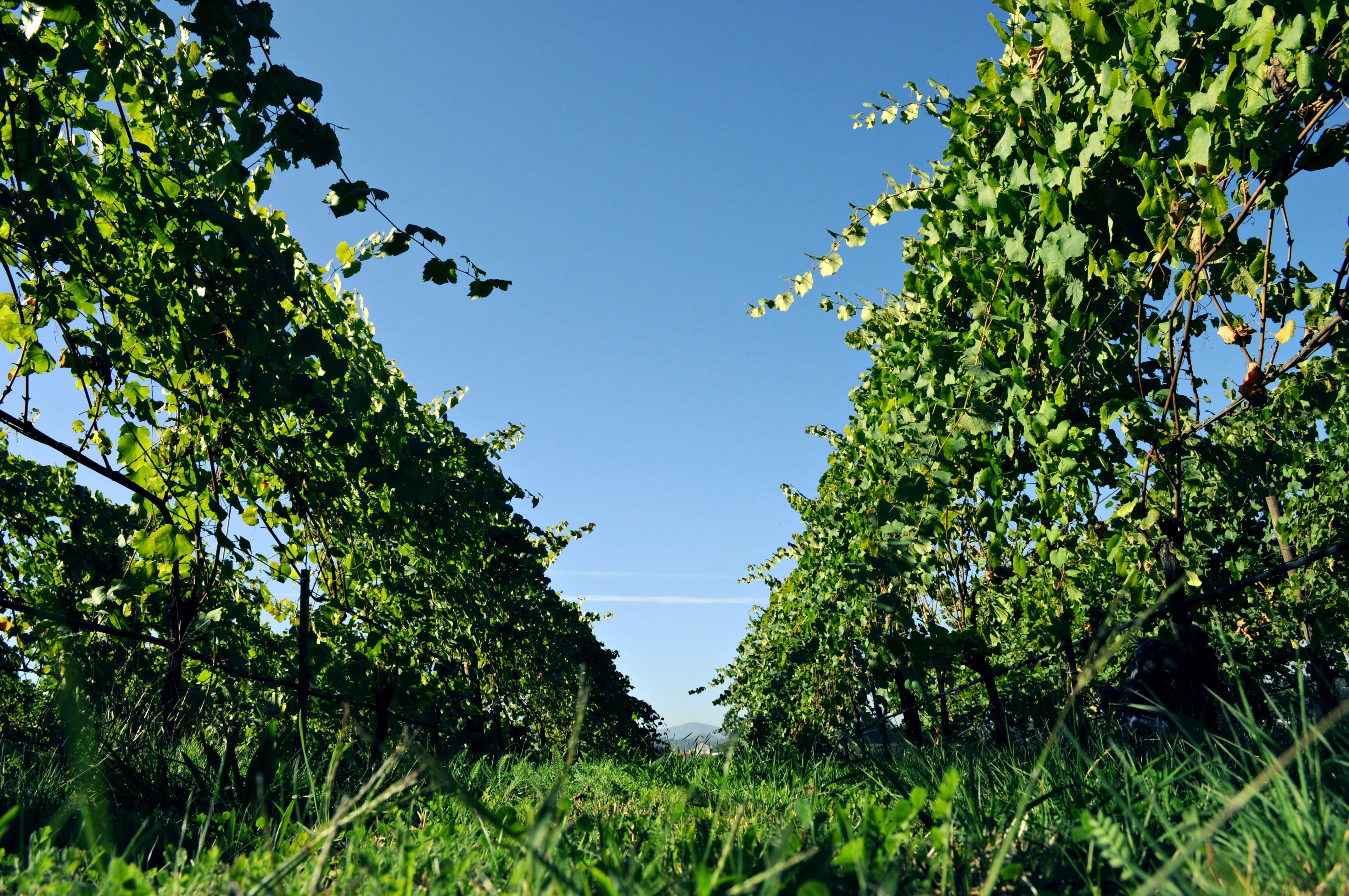 Tour do Minho & Vinho Verde Alvarinho