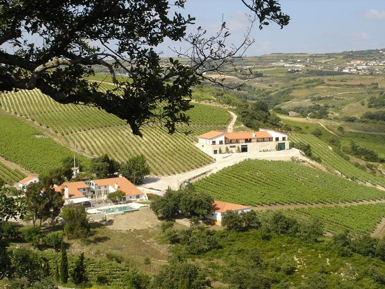 Vinhos de Bucelas - Arinto