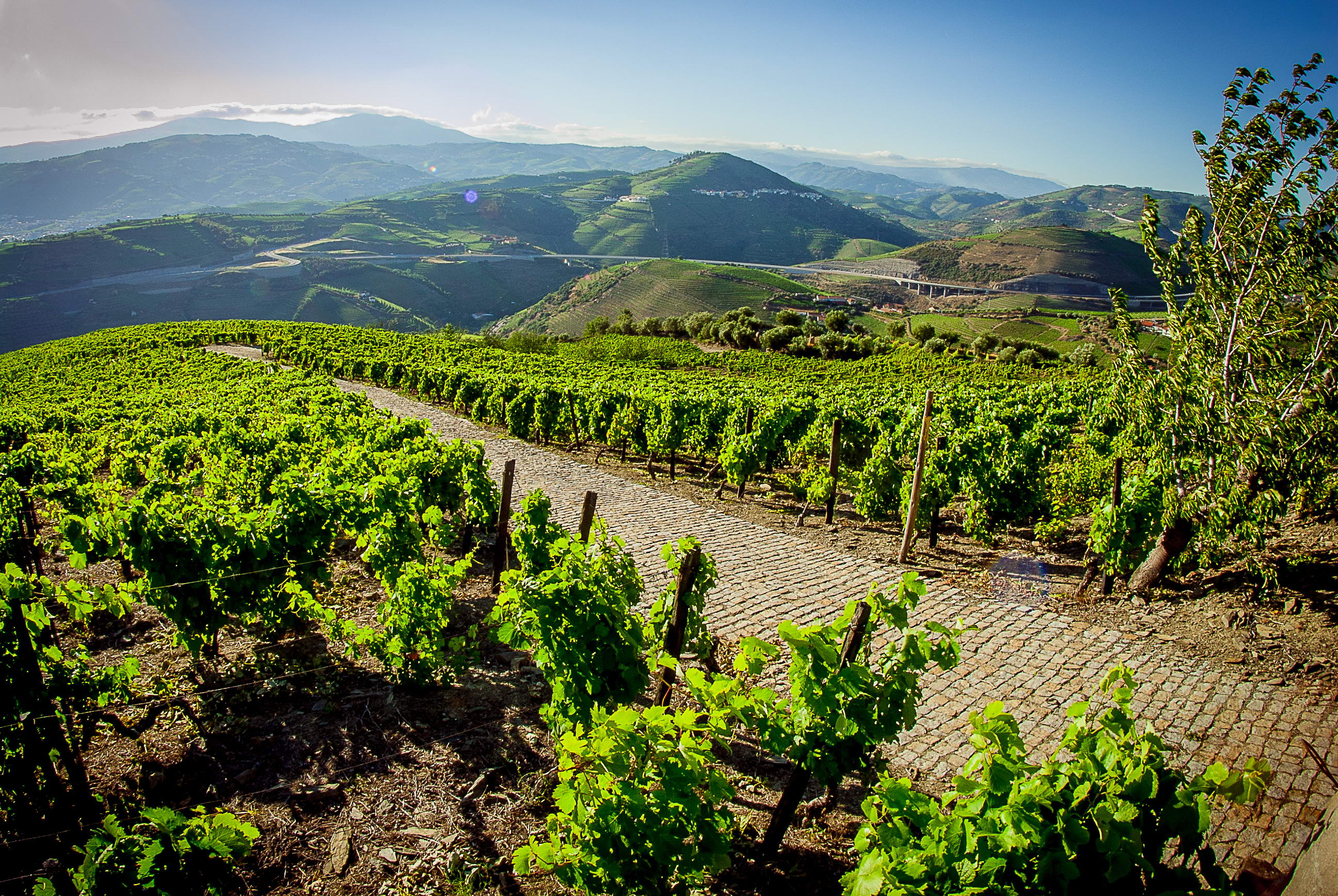 Food & Wine Tour no Norte e Douro