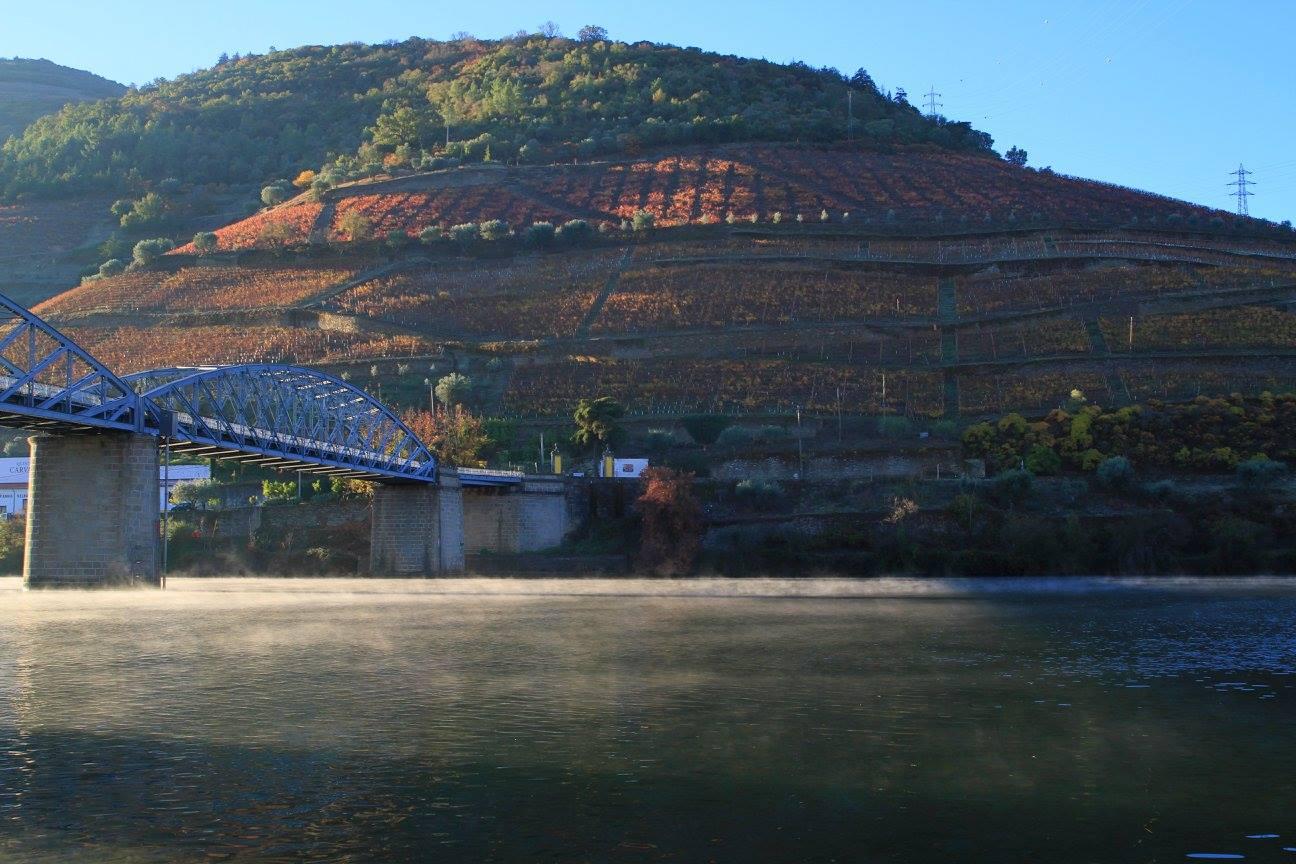 Baco - Alma do Douro