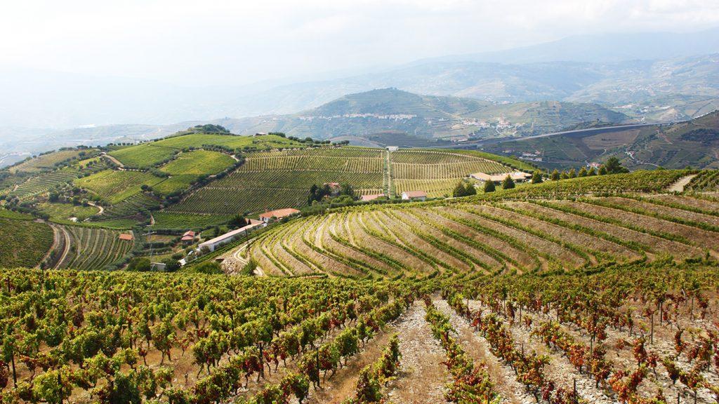 Quinta Seara d'Ordens - Vines & Wines