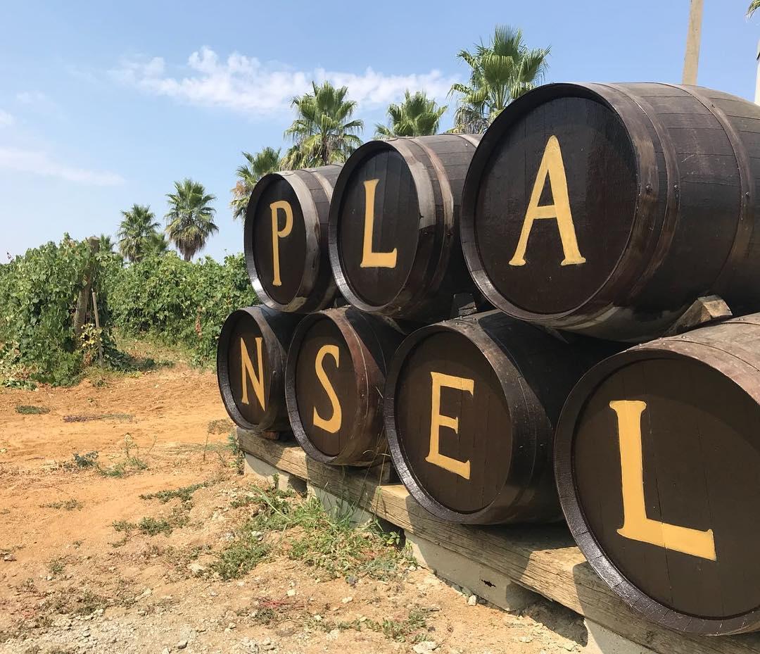 Quinta da Plansel – Meio-dia na Adega