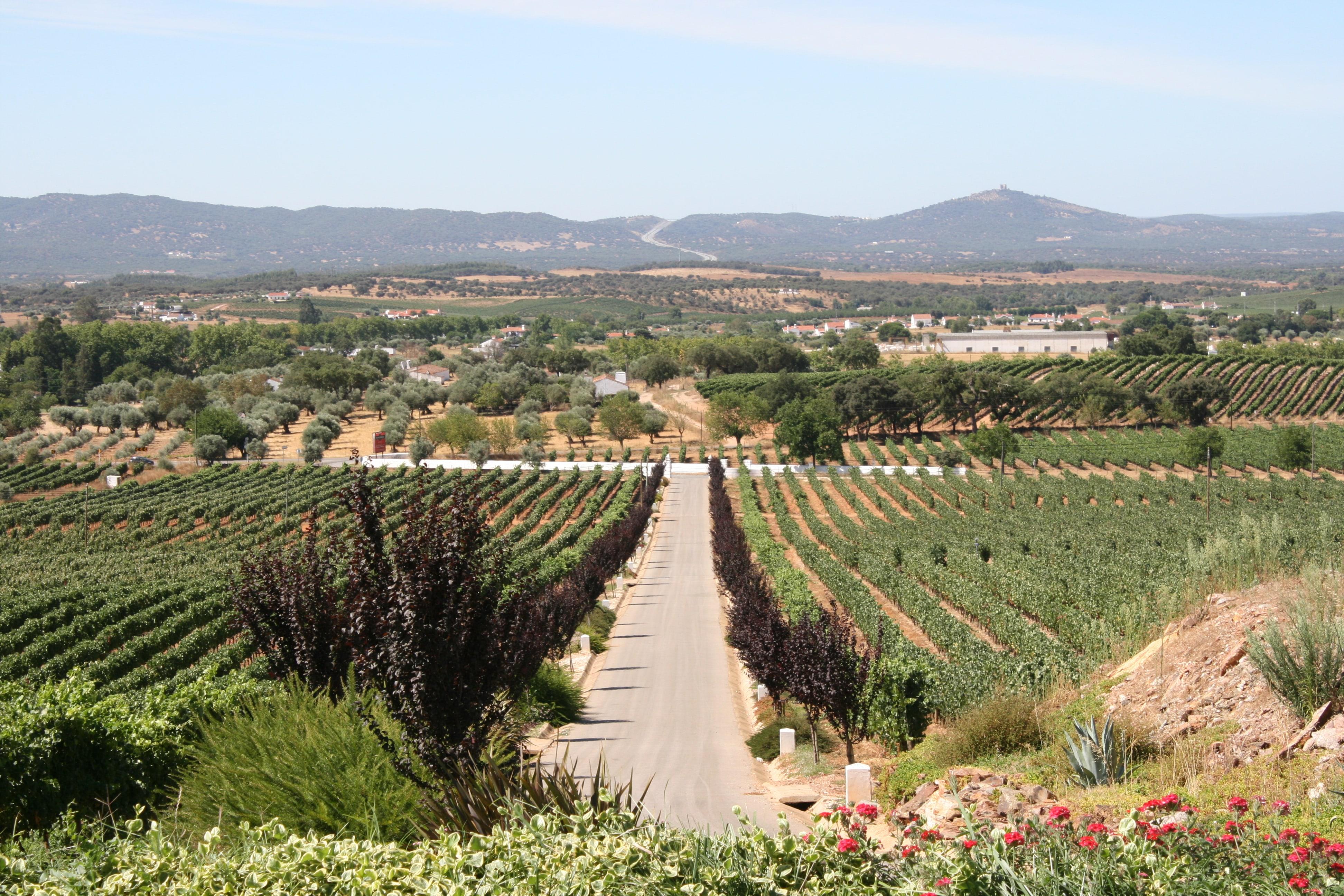 Encostas de Estremoz - Visita & Prova 4 Vinhos