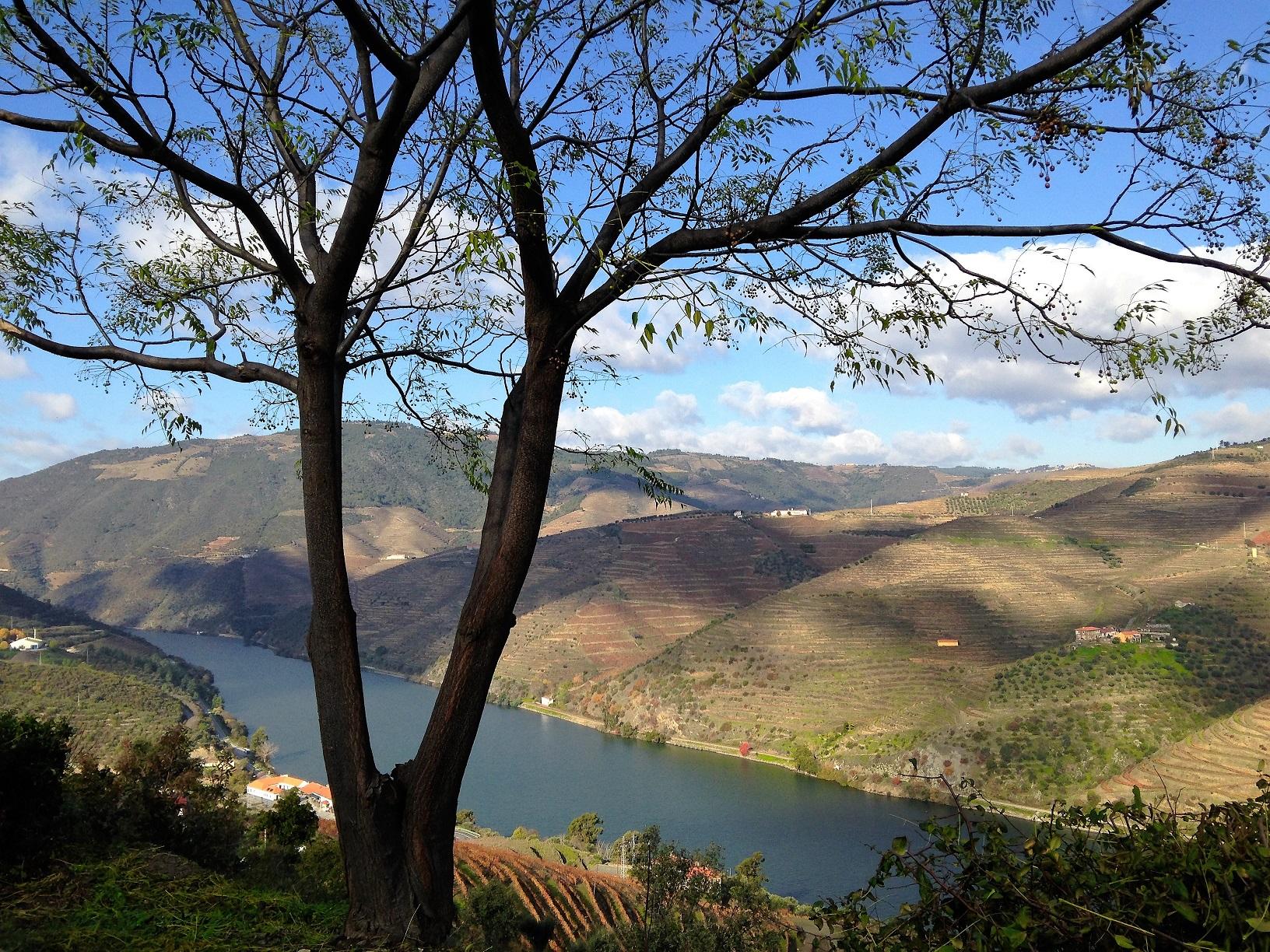 Douro Vision
