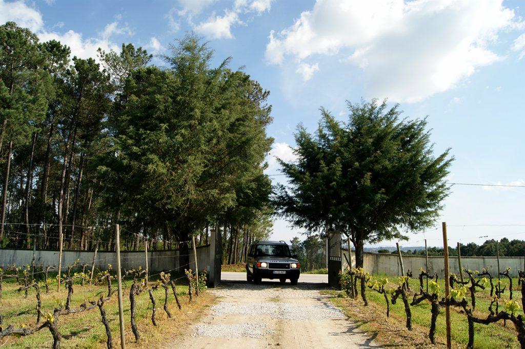 Tour & Dão Wines Cosy Vineyard