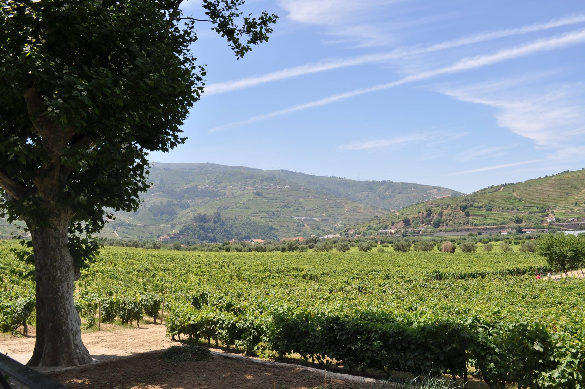 Quinta da Pacheca – Wine Break Experience
