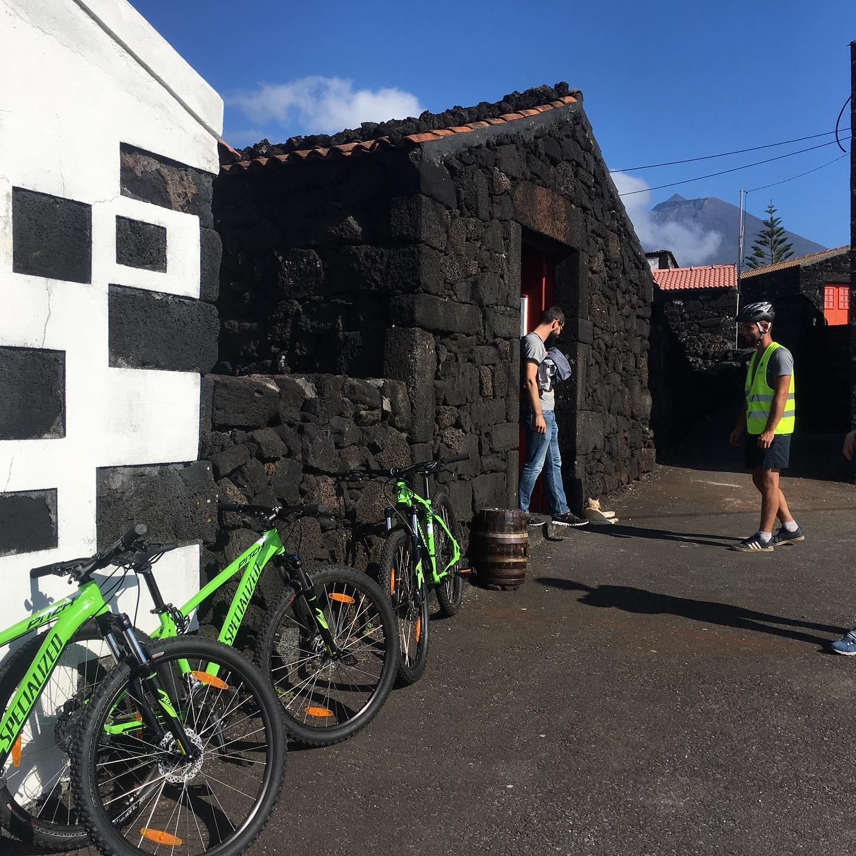 Tour en Bicicleta por los Viñedos del Pico