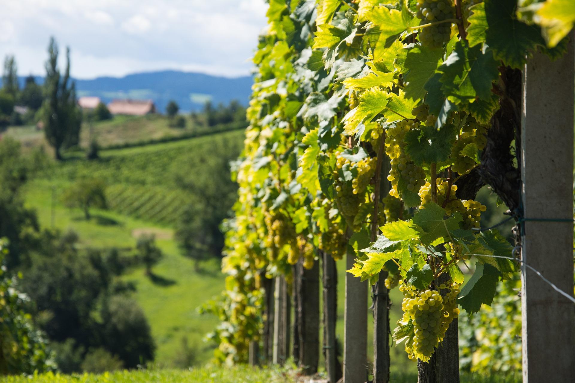 Tour Vinho Verde