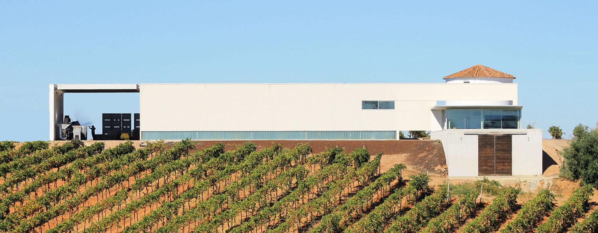Adega Monte Branco - Lunch & Wine Tasting